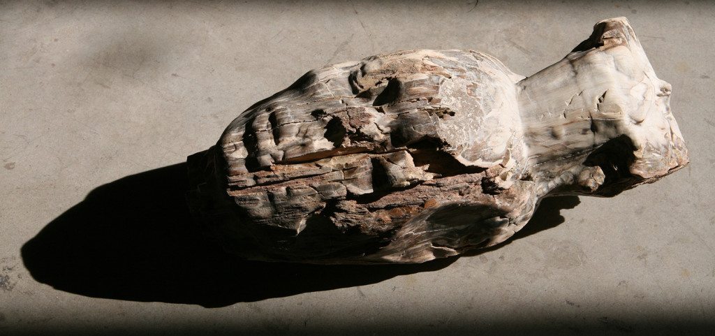 2016, Petrified Wood, 40 x 20 x 17 cm